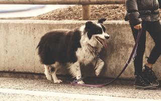 Hunde müssen an die kurze Leine (Symbolbild)